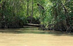 Mangroveskogar längs den Tarcoles floden arkivbild