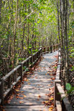 Mangroveskogbro Royaltyfri Bild