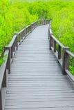 Mangroveskoggångbana royaltyfri foto