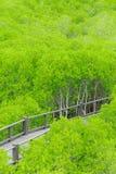 Mangroveskoggångbana royaltyfria foton