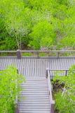 Mangroveskoggångbana royaltyfri bild