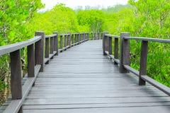 Mangroveskoggångbana royaltyfri fotografi