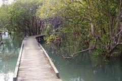 Mangrovespoor dichtbij Russell Royalty-vrije Stock Foto