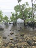 Mangrovestrand Nabire Papua Indonesien arkivbild