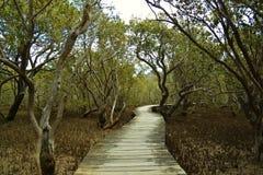 Mangrovestrandpromenad nära Pahia Arkivbild
