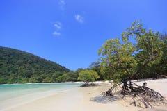 Mangroveträd Arkivbild