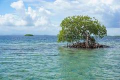 Mangroveträd i vatten med ön på horisonten Arkivfoto
