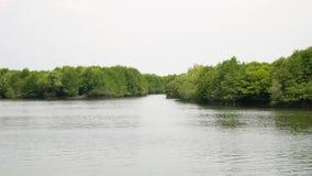 Mangroveträdet rotar i Långsam-flyttning vatten i Indonesien stock video