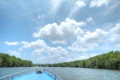 Mangroveträsk Royaltyfri Fotografi