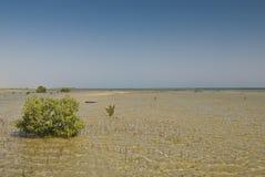 mangrovetreebarn Fotografering för Bildbyråer
