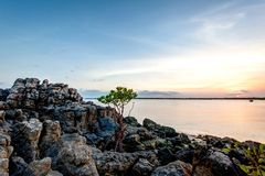 Mangroveunga trädet som växer ut ur, vaggar på bröllopsresafjärden Kalumburu royaltyfri fotografi