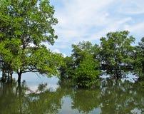 Mangrovewald Stockfotos