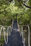 Mangrovewald Stockfoto