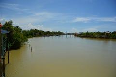 Mangrovewald mit blauem Himmel Stockfoto