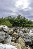 Mangrovewald mit Stein Stockfotografie