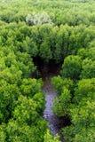 Mangrovewald in Thailand Stockbilder
