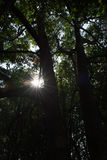 Mangrovewald in Thailand Stockbild