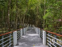 Mangrovewildernis in Langkawi, Maleisië stock foto