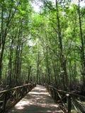Mangrovia 2 fotografia stock