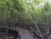 mangrovia Immagine Stock