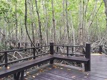 mangrovia Immagini Stock Libere da Diritti