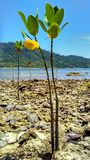 mangrovia Fotografie Stock Libere da Diritti