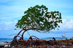 Mangrovia della spiaggia Fotografia Stock Libera da Diritti
