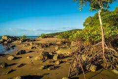 Mangrovia in diciassette settanta nel Queensland, Australia fotografia stock libera da diritti