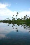 Mangrovia in hithadhoo dell'atollo di Addu (Maldives) fotografia stock