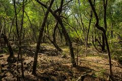 Mangrovia Karimun verde Jawa fotografia stock libera da diritti