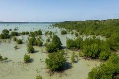 Mangrovia Karimun verde Jawa fotografie stock