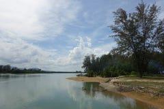 Mangrovia sotto il cielo nuvoloso Fotografie Stock