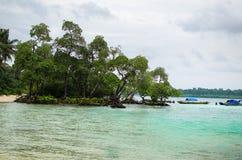 Mangrovia sulla spiaggia Fotografie Stock Libere da Diritti