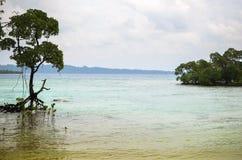 Mangrovia sulla spiaggia Fotografie Stock
