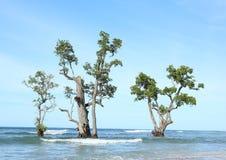 mangrovie Fotografia Stock Libera da Diritti