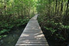 mangrovie Fotografia Stock