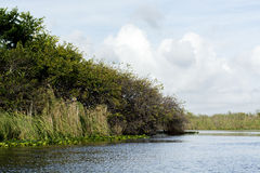 Mangrovie dei terreni paludosi Fotografia Stock