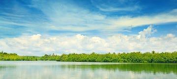 Mangrovie equatoriali Fotografia Stock