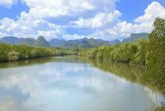Mangrovie lungo il fiume Fotografie Stock