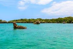 Mangrovie Zanzibar Fotografia Stock Libera da Diritti