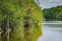 Mangrowe - Biscayne park narodowy - Floryda Zdjęcia Stock