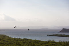 Mangrowe i linia brzegowa blisko Punta Gallinas w losie angeles Guajira Fotografia Royalty Free