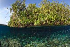 Mangrowe i rafa, Raja ampat, Indonezja Fotografia Royalty Free