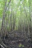 Mangrowe pole zdjęcia stock