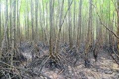 Mangrowe pole zdjęcie stock