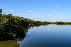 Mangrowe prezerwy na jeziorze Zdjęcia Royalty Free