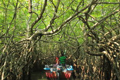 Mangrowe reforest Fotografia Royalty Free