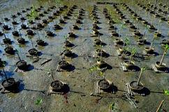 Mangrowe reforest obraz stock