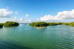 Mangrowe w Meksyk obrazy stock