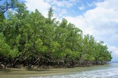 Mangrowe w południe Thailand Zdjęcie Royalty Free